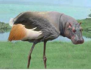 hipabbit