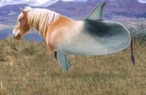 wartphin